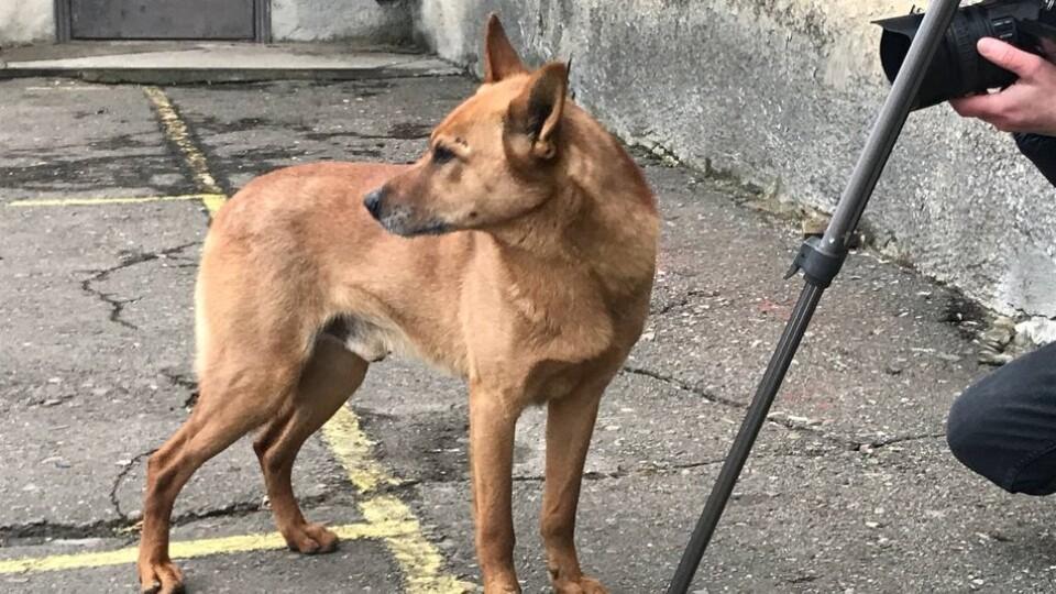 У Луцьку врятували собаку, який цілу добу просидів у триметровій ямі