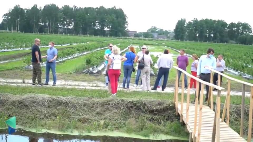 «Шукають цапа-відбувайла», – депутати облради про «наїзди» на «Волинську ягідку»
