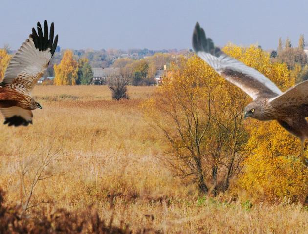 Птахи нашого міста на світлинах луцького фотографа