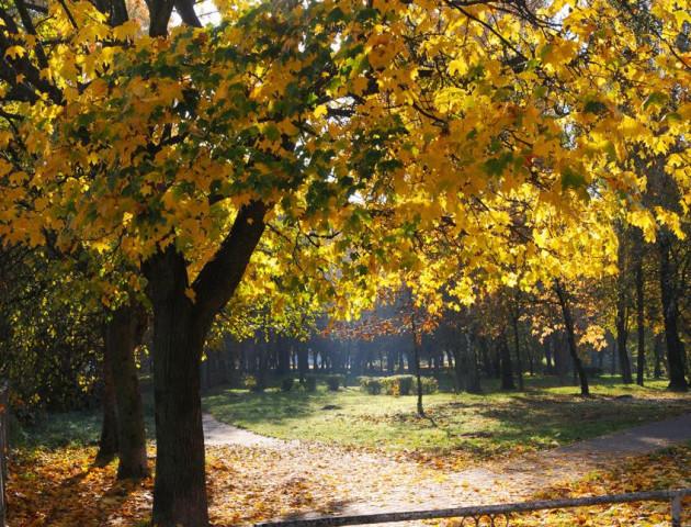 Пізня осінь у Луцьку на світлинах Віктора Чухрая