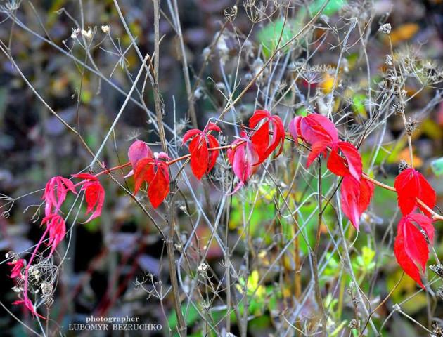 Барви осені на світлинах луцького фотографа