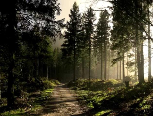 Голова облради пояснив, як повернути ліси  «Волиньоблагролісу»