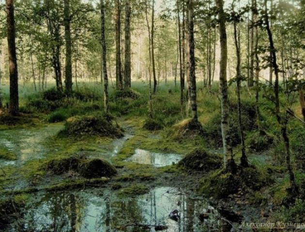 На Волині підлітки заблукали і загрузли в болоті