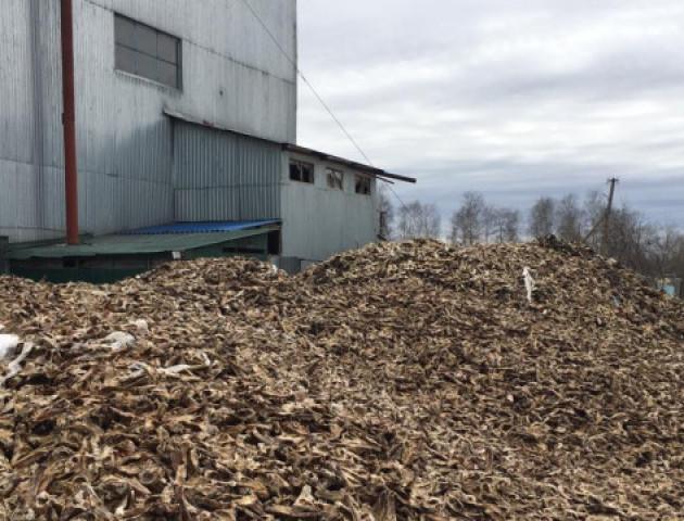 На території Ковельського ветсанзаводу досі не відремонтували резервуари для відходів