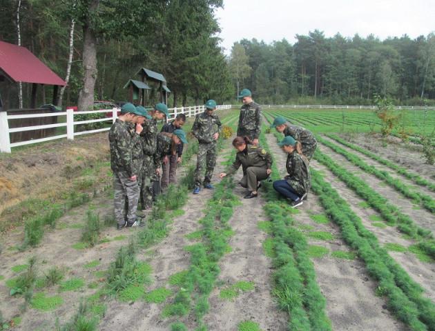 Підготовка до зими: на Любешівщині виростили мільйон сіянців сосни. ФОТО