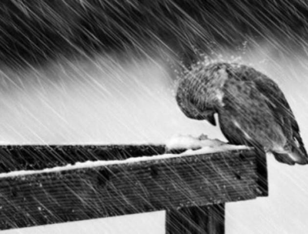 В Україну суне мокрий сніг з дощами
