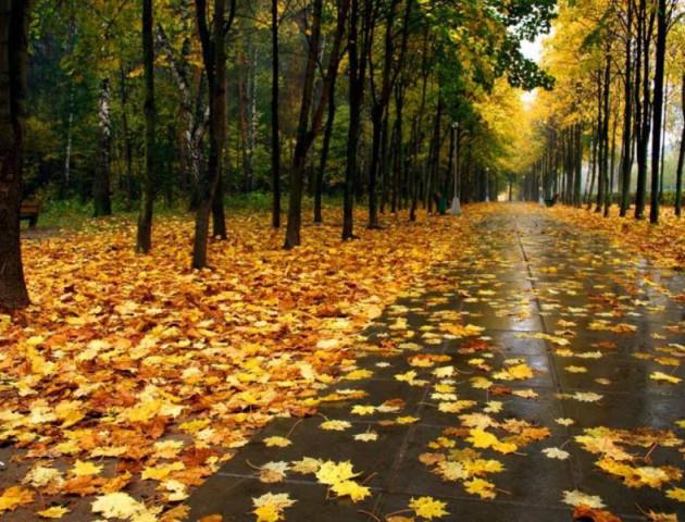 Якою буде погода у Луцьку та області 3 листопада