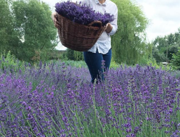 На Волині фермерка вирощує неймовірні сади лаванди. ФОТО