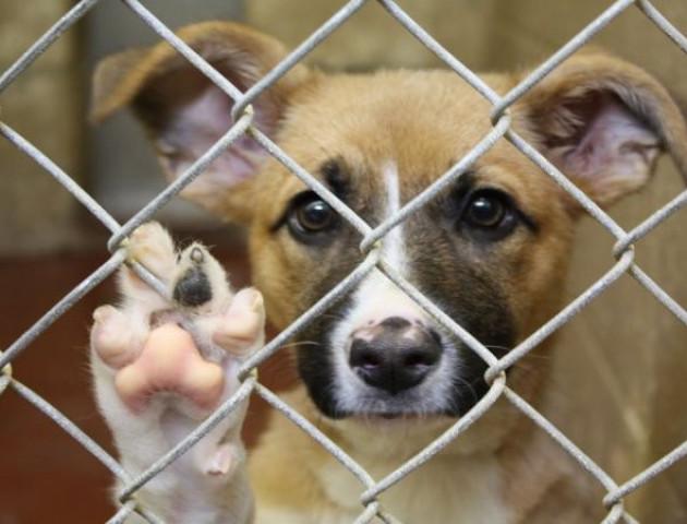 У Луцьку на відлов собак планують виділяти кошти