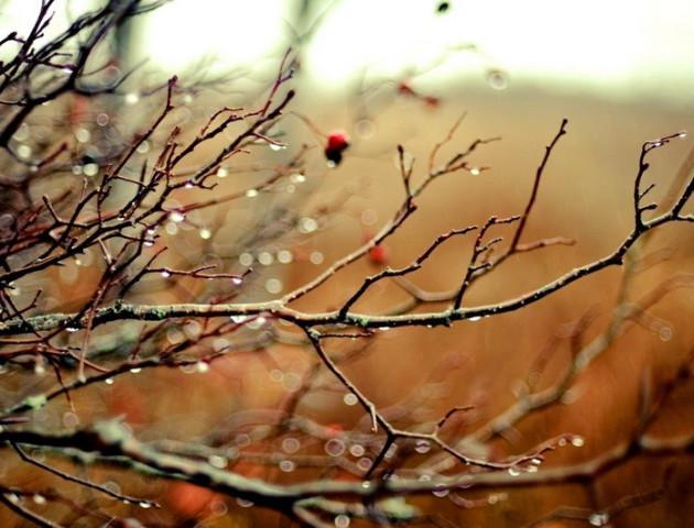 Якою буде погода у Луцьку та області 23 листопада