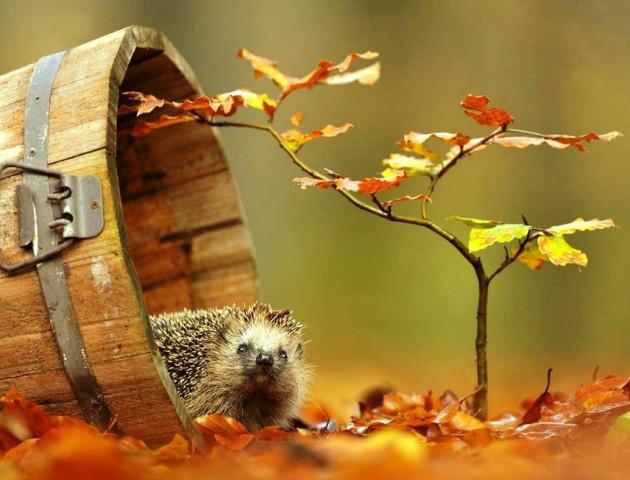 Якою буде погода у Луцьку та області 24 листопада