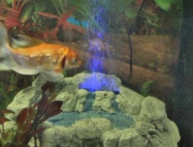 У Луцьку – виставка-конкурс дизайнерських акваріумів. ВІДЕО