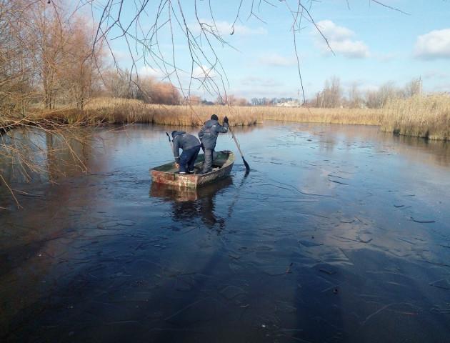 Працівники ДСНС Черкащини визволили лебедів з льодяної пастки