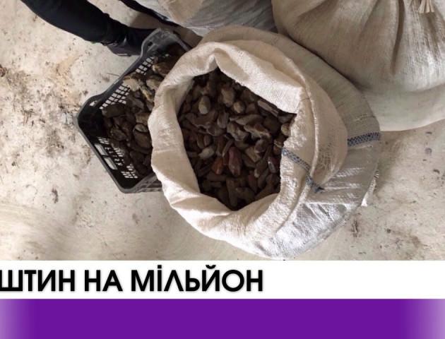 У підпільних цехах Волині вилучено бурштин вартістю понад мільйон гривень