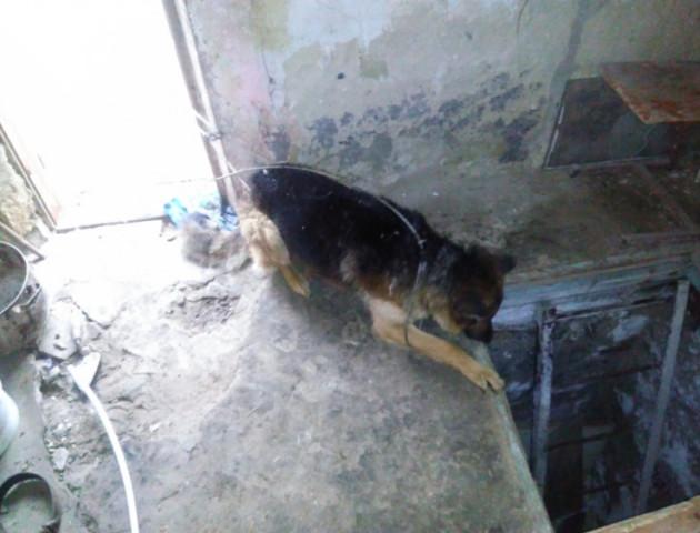 На Волині пожежники врятували собаку, який впав у підвал