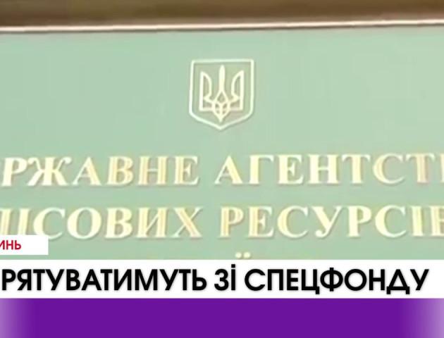 В Україні планують рятувати ліс завдяки спецфонду. ВІДЕО
