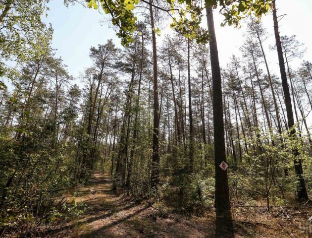 На Волині 6 майстрів лісу покарали за правопорушення, пов'язані з корупцією