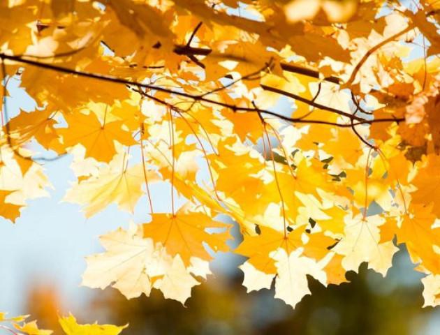 Якою буде погода у Луцьку та області 6 листопада