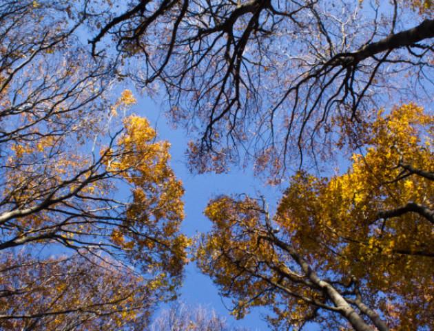 Якою буде погода у Луцьку та області 7 листопада