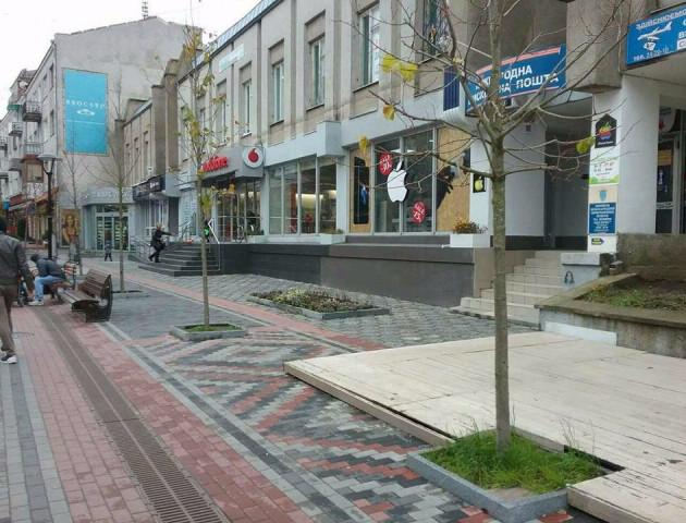 Нові дерева у центрі Луцька «прикрасили» рекламою