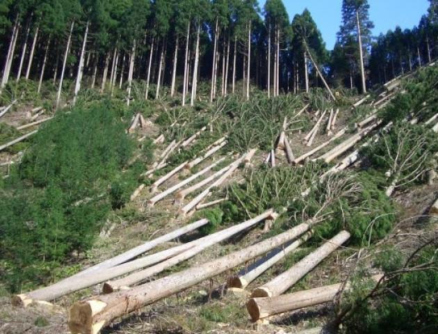 На Волині чоловік вкрав лісу на понад 60 тисяч