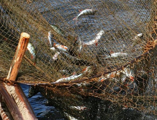 Волиняни порушують закони любительського рибальства