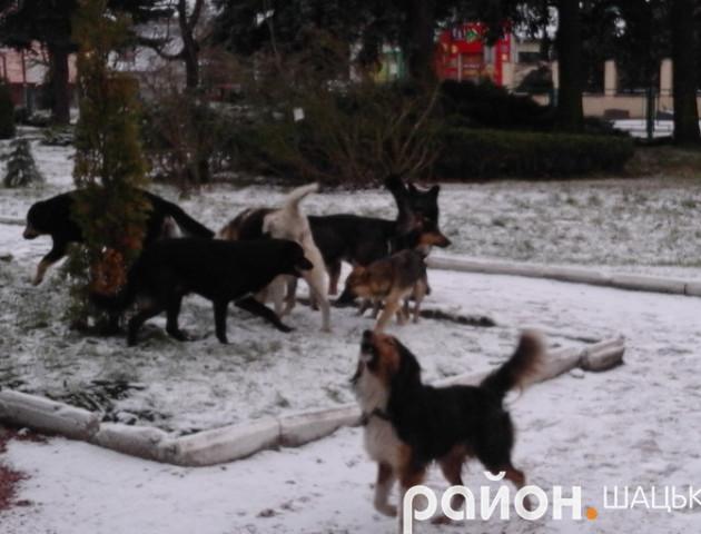 У Шацьку зграя бродячих собак нападає на людей