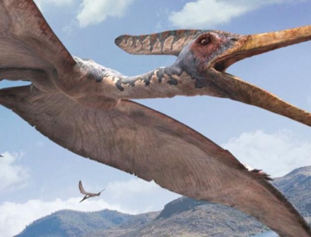 У Китаї знайшли 200 яєць птерозаврів — в десятки разів більше, ніж за всю історію розкопок