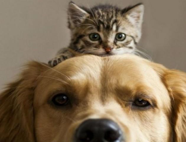 У Луцьку затвердили нові правила утримання тварин