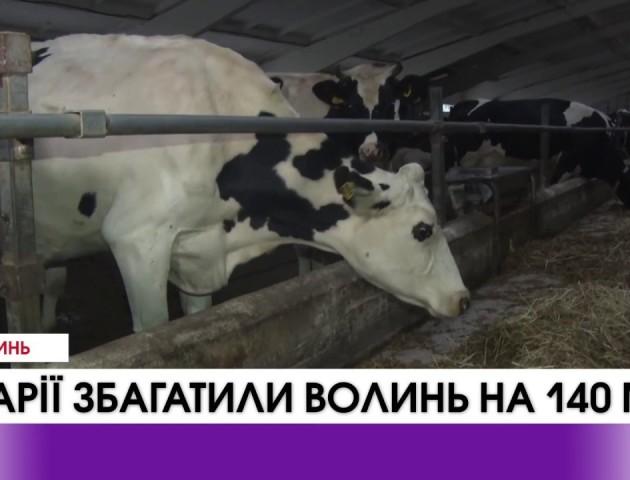 Волинські аграрії сплатили до держбюджету майже 140 мільйонів гривень. ВІДЕО