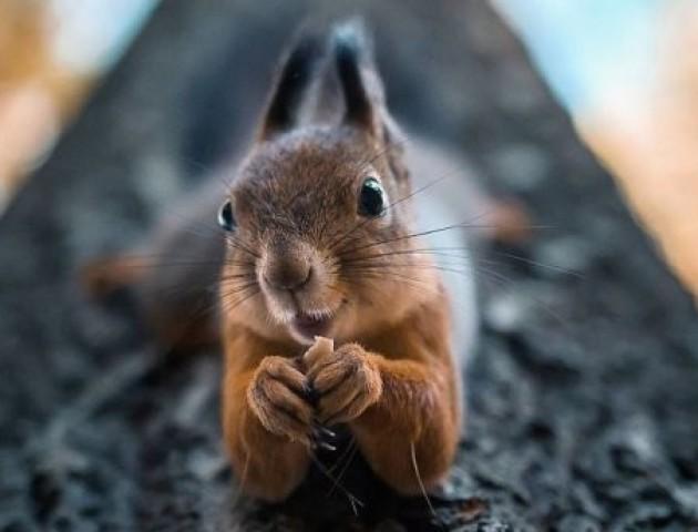 Фотограф знімає тварин у неймовірно проникливих ракурсах. Фото