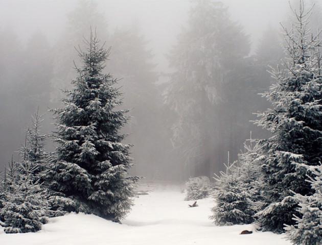 Вирубка лісу і хабарі на Волині. ВІДЕО