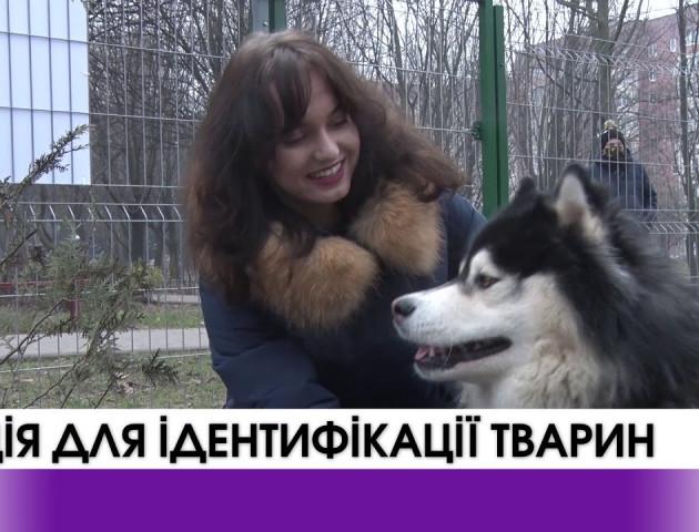У Луцьку «Ласка» провела акцію для ідентифікації тварин.ВІДЕО