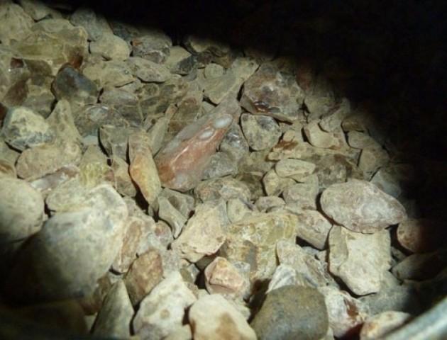 Словацькі митники затримали понад 60 кілограмів волинського бурштину