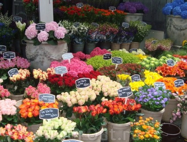 У Луцькраді досі не знають, куди перенести квіткарів із проспекту Волі