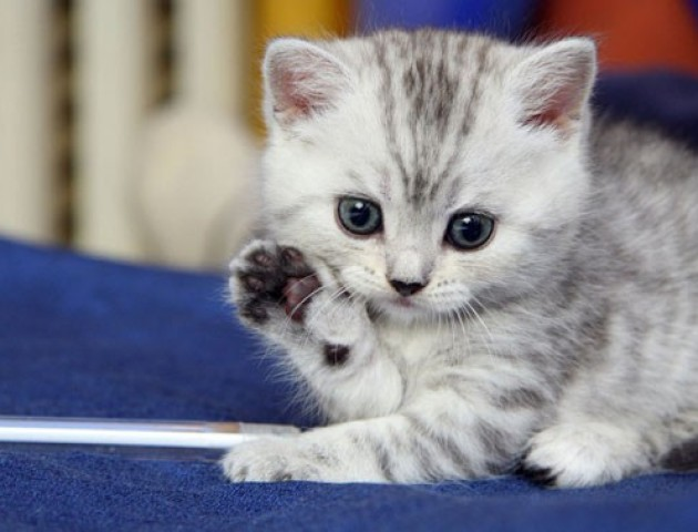 За знущання над кошеням лучанину дали п'ять років