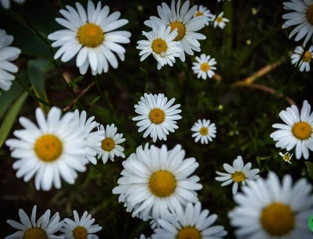 Дивовижні квіти Луцького зоопарку