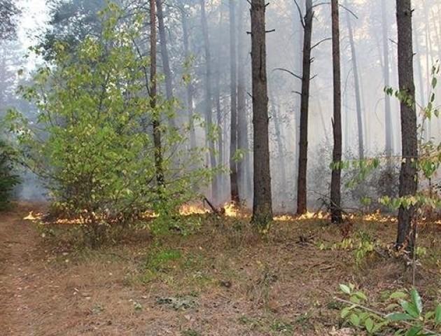 З початку року на Волині згоріло майже 70 гектарів екосистем