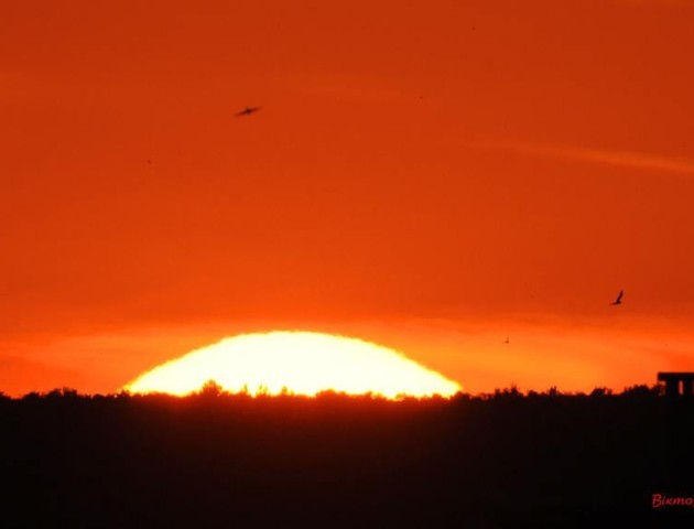 Літнє сонцестояння: підбірка світлин луцького фотографа
