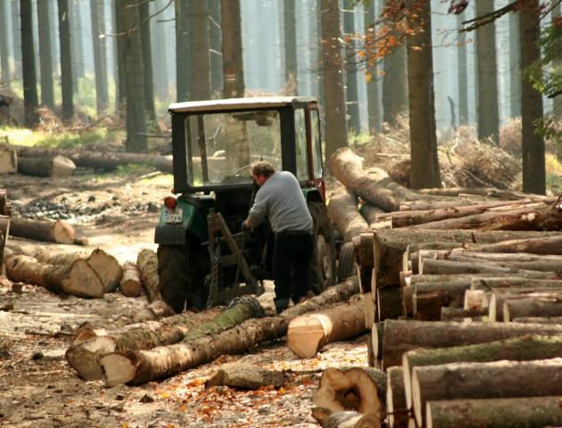 На Волині судитимуть посадовця за незаконну вирубку лісів