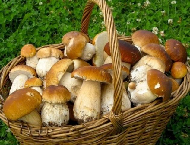 Волинянин знайшов гігантського білого гриба
