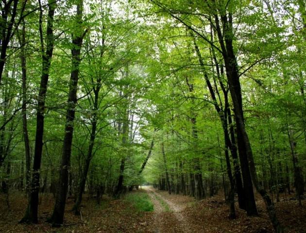 Павло Данильчук: у «Цуманській пущі»вирубують заповідний ліс