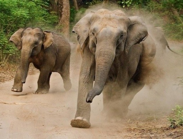 Зголоднів: слон зупинив вантажівку, щоб поїсти картоплі. ВІДЕО