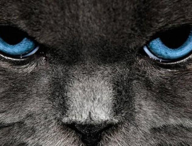 Вперше у Луцьку відбулася ярмарка котів