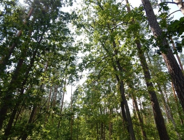 Поліцейські врятували дівчину, яка заблукала в лісі