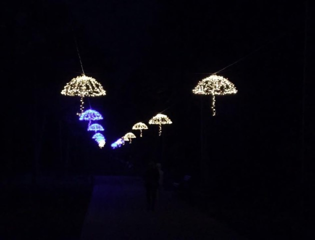 У Луцьку підсвітили паркову алею парасольками. ВІДЕО