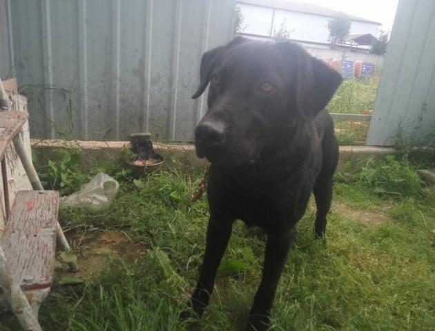 У Луцьку розшукують господаря собаки, який заскочив у чужу автівку