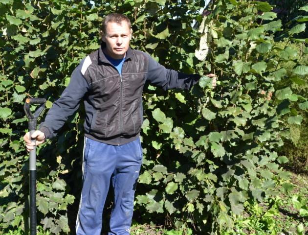 Волинянин повернувся з польських зарібків і взявся робити бізнес на горіхах