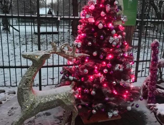 Чотири фотозони та смаколики для малечі: як Луцький зоопарк готується до новорічних свят