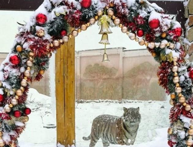 З іграми, танцями та подарунками: у Луцькому зоопарку влаштували веселе свято. ФОТО